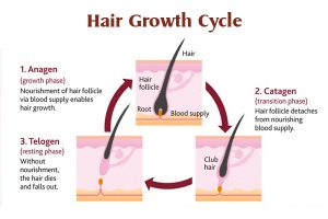 Hair growth stages after hair transplant